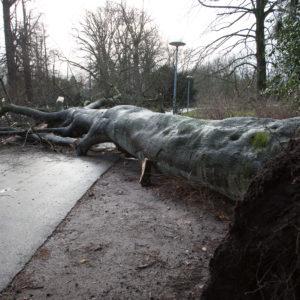 Storm eist zeven bomenlevens