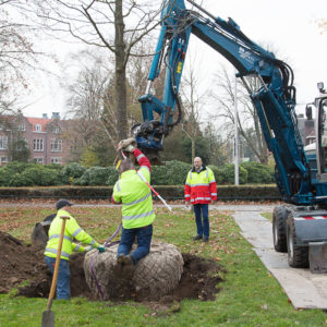 Dikkere bomen geplant in het park