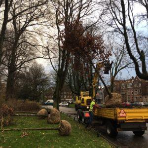 Vijf nieuwe dikkere bomen geplant